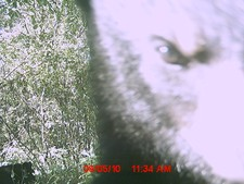 A bear doesn't like the trail cam